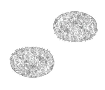 Adhesive Backed Velcro® Dots